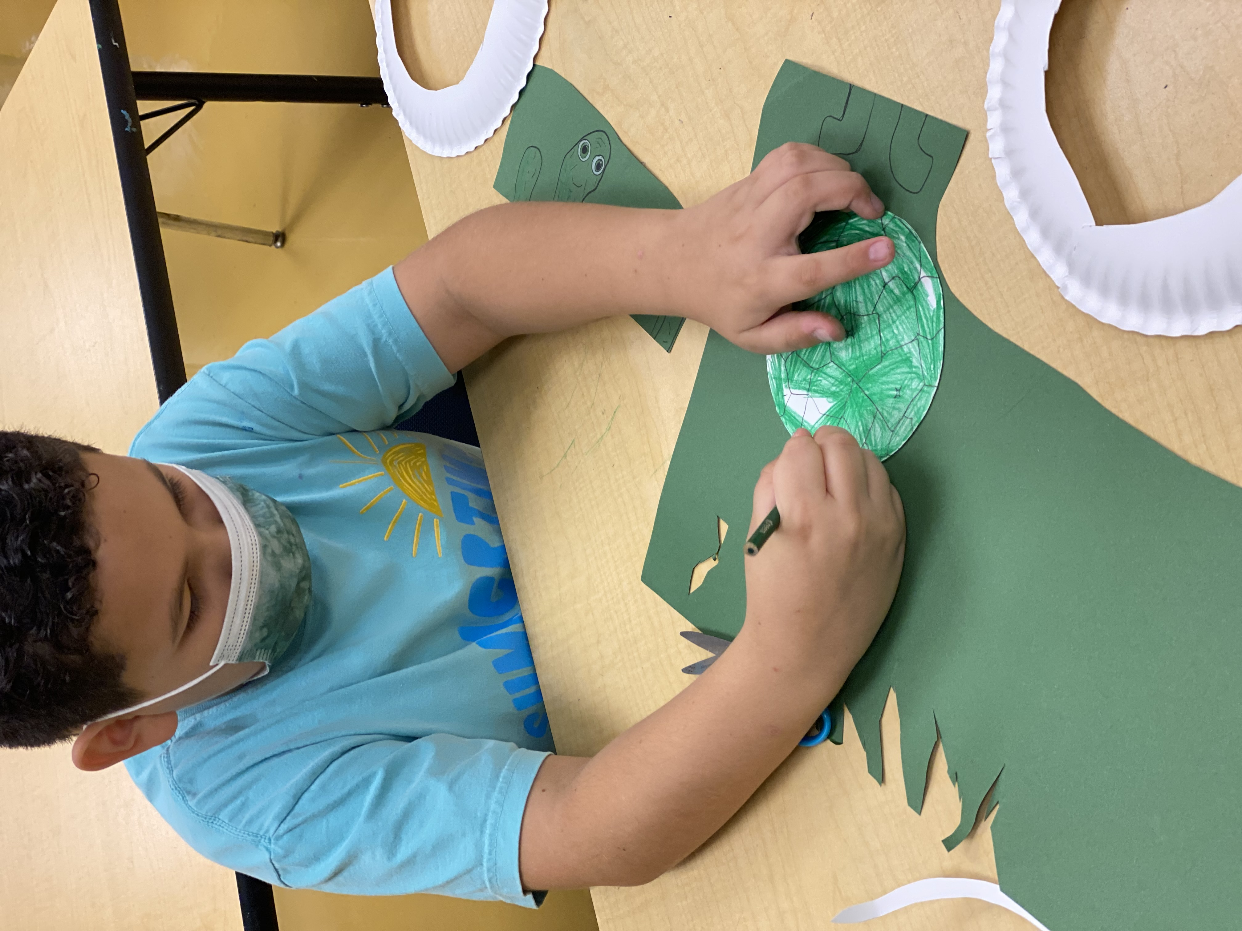 Paper plate turtle Image number 4